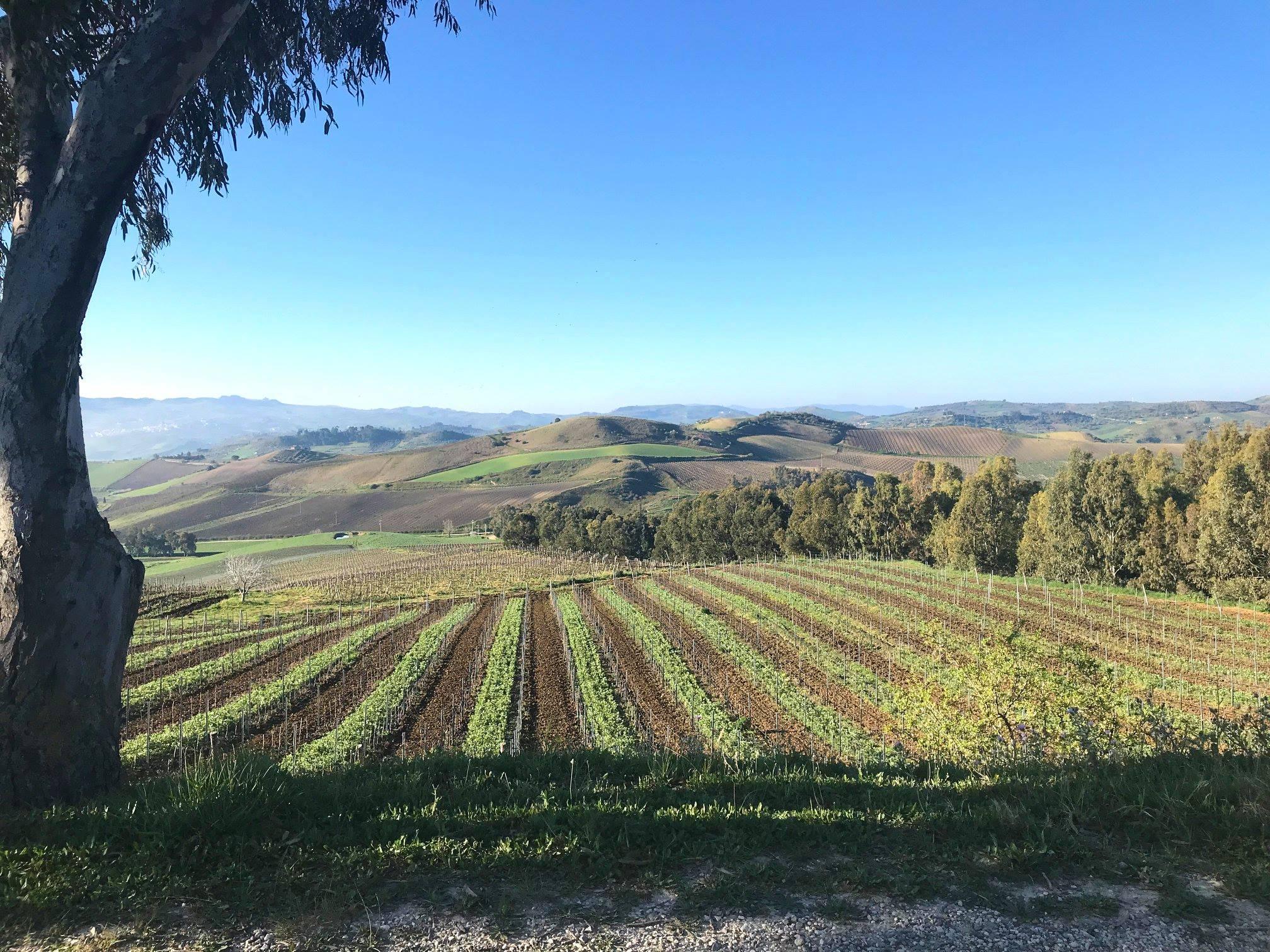 Azienda vinicola Tasca d'Almerita