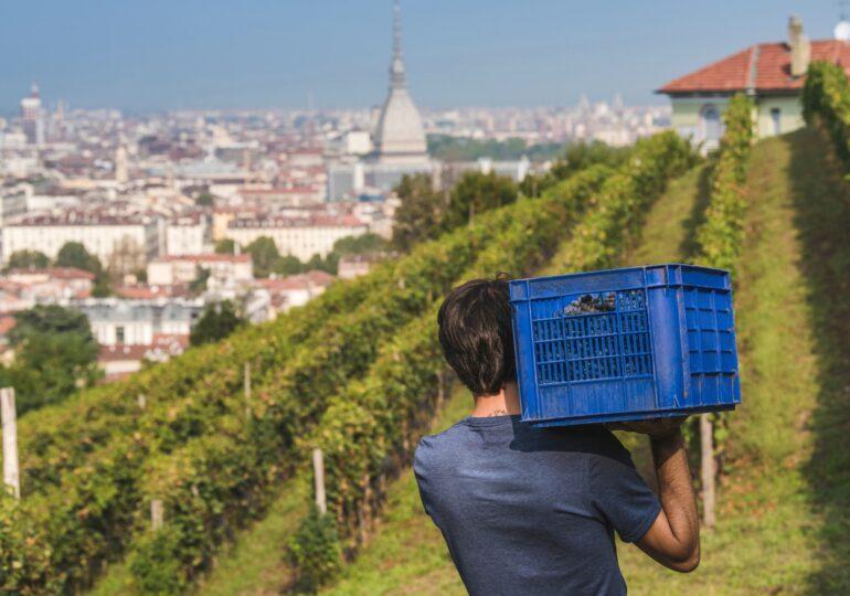 """Freisa"" il vino di Torino"