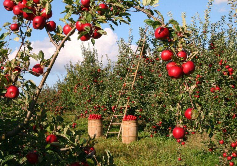Nel nome dell'agricoltura biologica