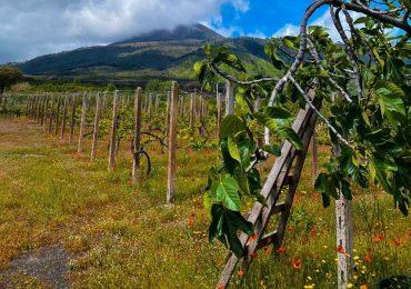 Volcanic Wine