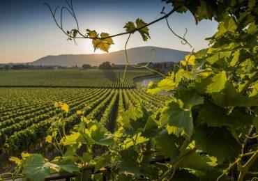 Franciacorta protagonista alla Milano Wine Week